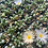 """Thumbnail: Baby Toes, 2"""" Succulent"""