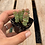 """Thumbnail: String of Buttons, 2"""" Succulent"""