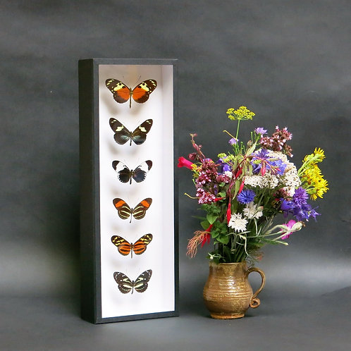 A Heliconius Tower