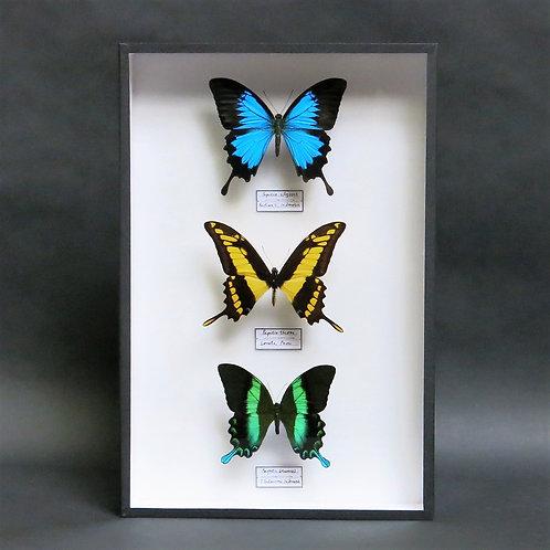 A Swallowtail Selection