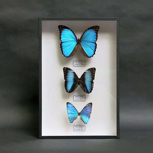 Three Extraordinary Morphos
