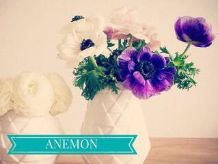 Bezpłatna lekcja florystyki - Anemony