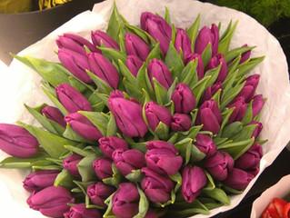 Bezpłatna lekcja florystyki - Tulipany