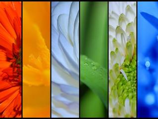 Bezpłatna lekcja florystyki - kolory część I
