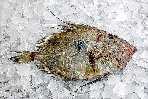 Pesce San Pietro pescato 1kg