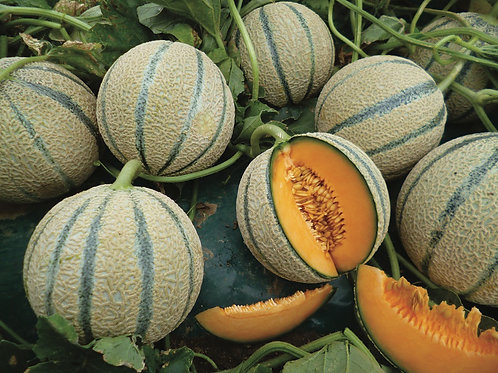 Melone retato 1 pezzo -