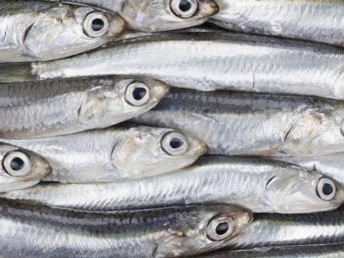 Alici pescato Italia  1kg
