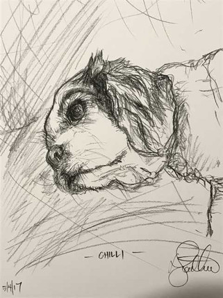 Chilli - the King Charles Cavalier
