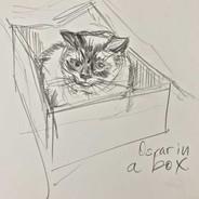 Oscar in a Box