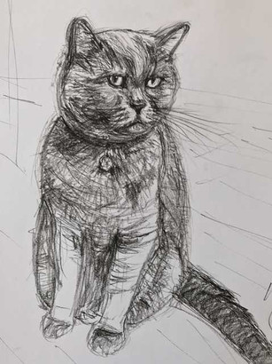 A study of a British Shorthair