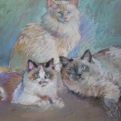 Portrait of Three Loving Felines