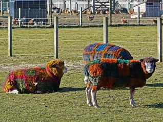 Bring your tartan rugs ... the EdShorts Friday night
