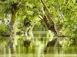 Le marais mouillé de la Venise Verte