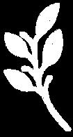Palmette blanche