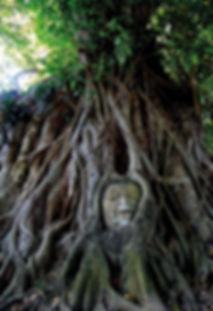 arbre-racine-therapie.jpg