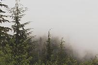 evergreen-843079__480.jpg