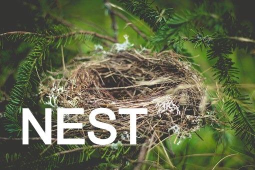 nest-918898__340_edited