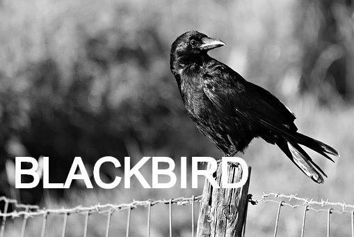 crow-3560516__340_edited