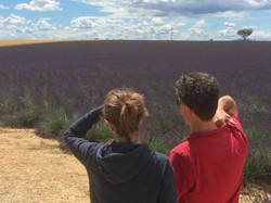 Des touristes regardant un champs de