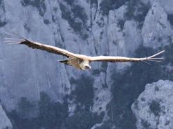 Photo d'un aigle volant dans les gor