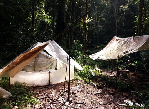 Džungle okolo Ketambe 3