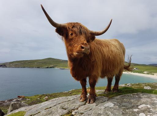 Soukromé letní Hebridy 4