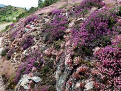 rozkvetlá Asturie