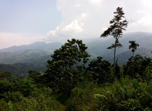 Džungle okolo Ketambe 4