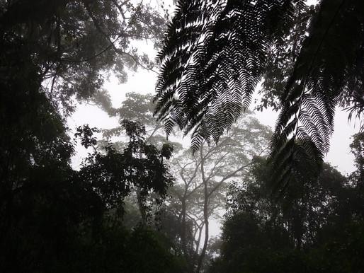 Výlet do pralesa, Bali