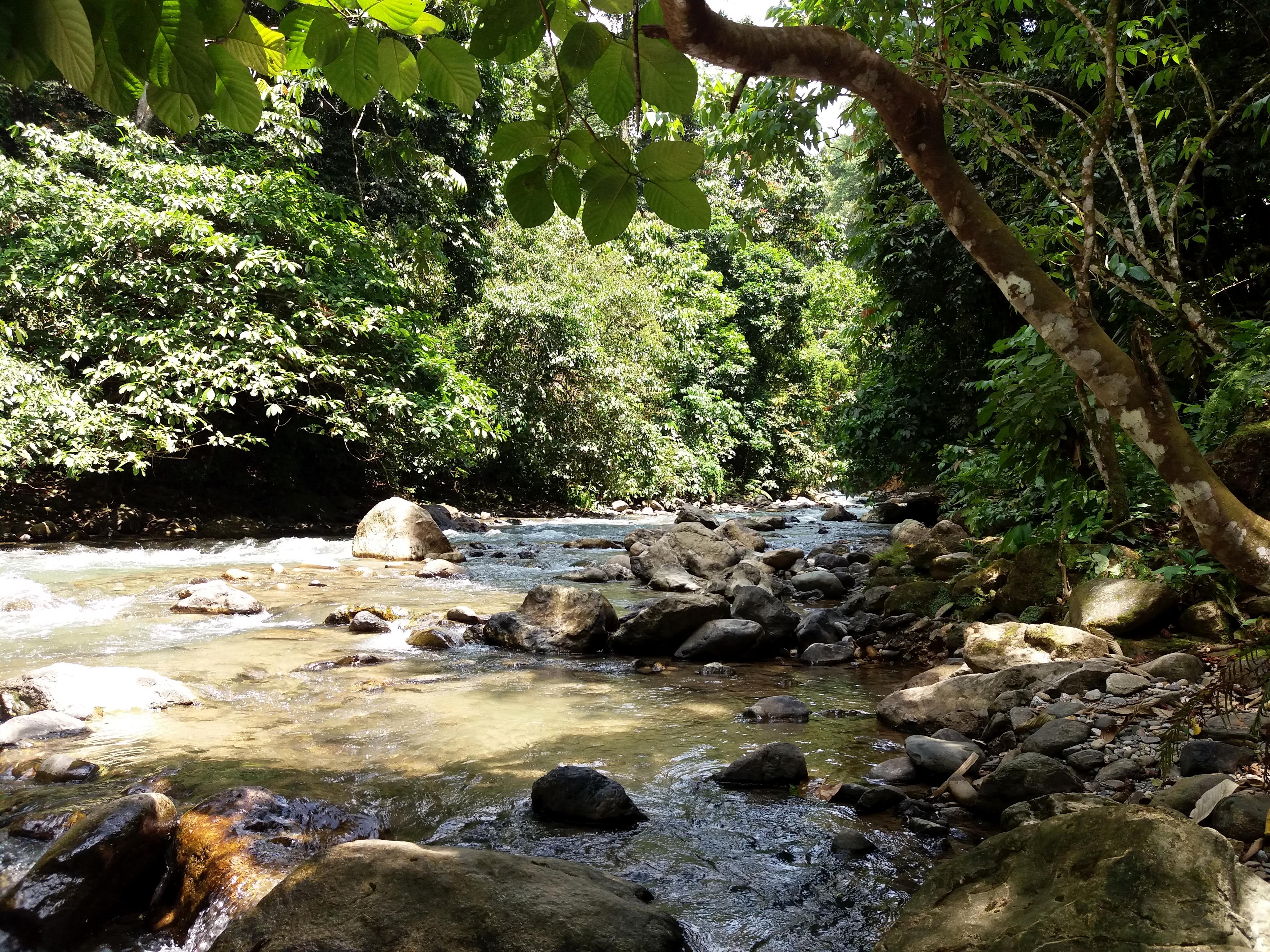 řeka v džungli