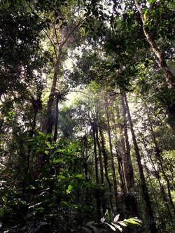 Džungle v Ketambe
