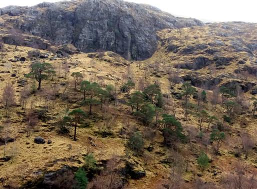 Glen Nevis a Steal Waterfall