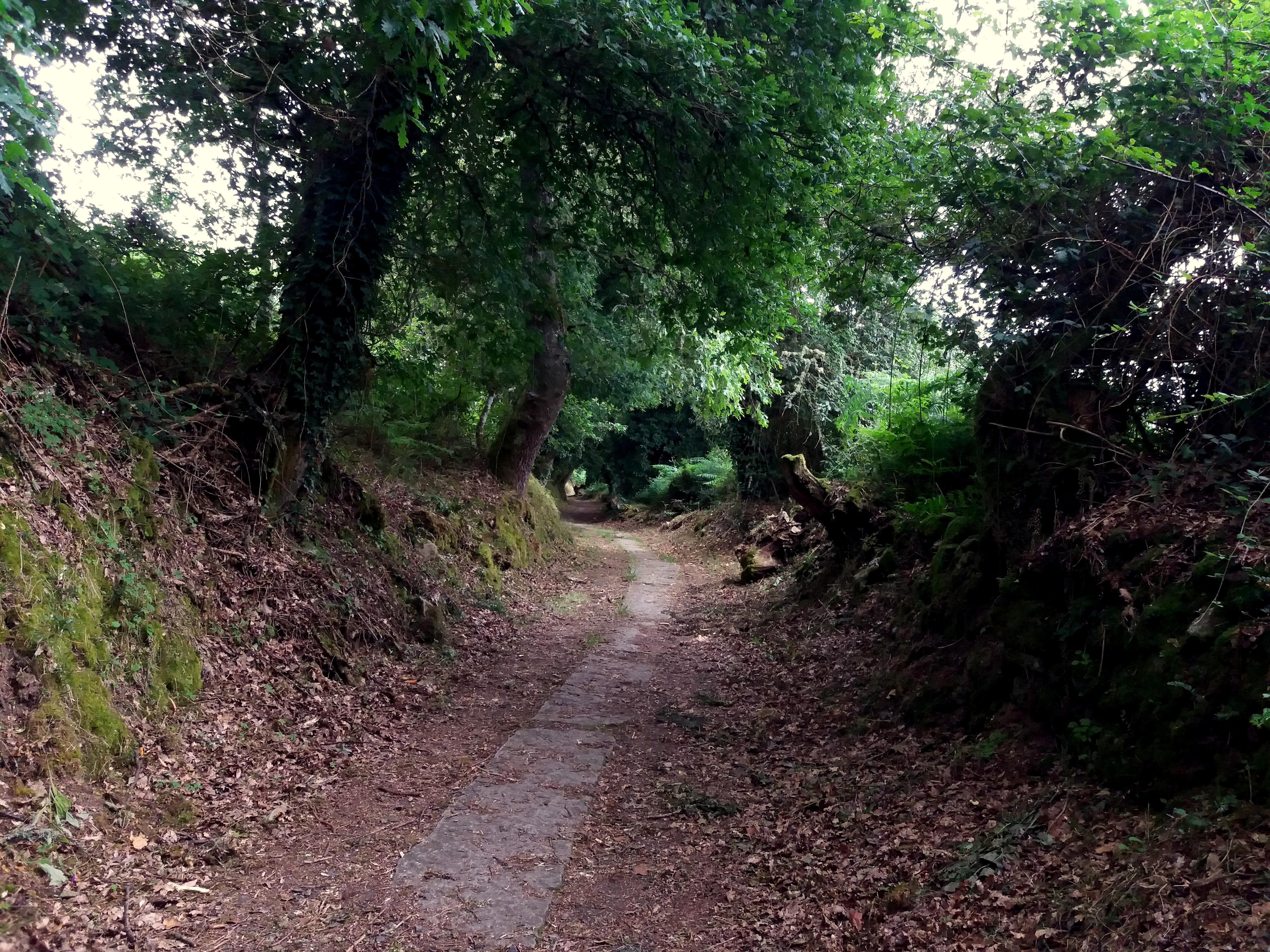 v Galicii