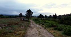 Camino Norte