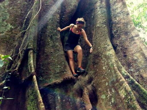 Džungle okolo Ketambe 2