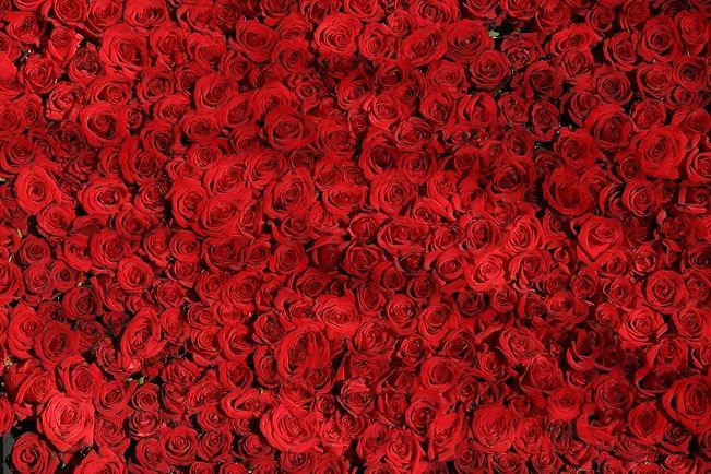 rose-rosse-passaggi-notiziario-culturale