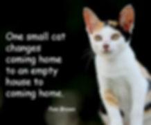 Cat Adoptions