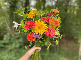 A colorful cut flower bouquet for a subscription delivery or CSA share. Local farm fresh cut flowers include yellow sunflowers, orange zinnias and black-eyed susans.