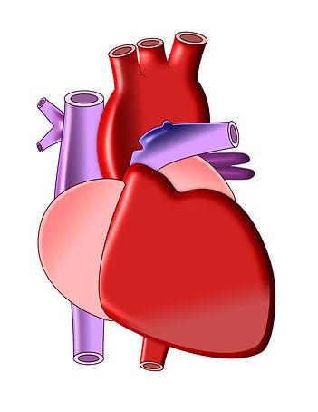 Yoga stärkt Dein Herz.