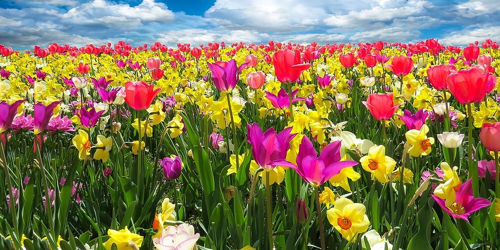 Mit Yoga in den Frühling