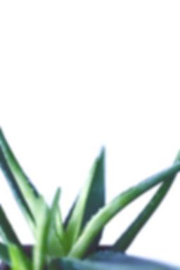 Meet Vithya, the aloe vera plant_edited.