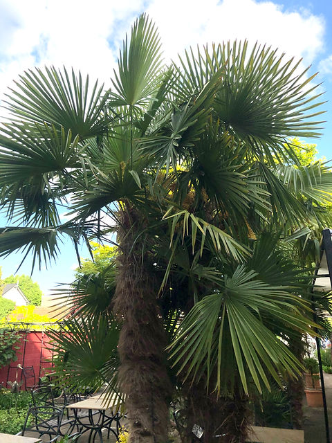PalmsGarden.jpg