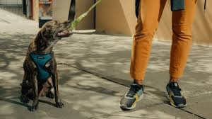 Keeping Your Dog Engaged During Dog Walking