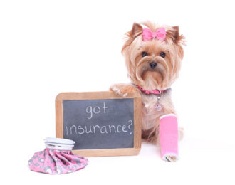 The Importance of Hiring A Licensed & Insured Dog Walker