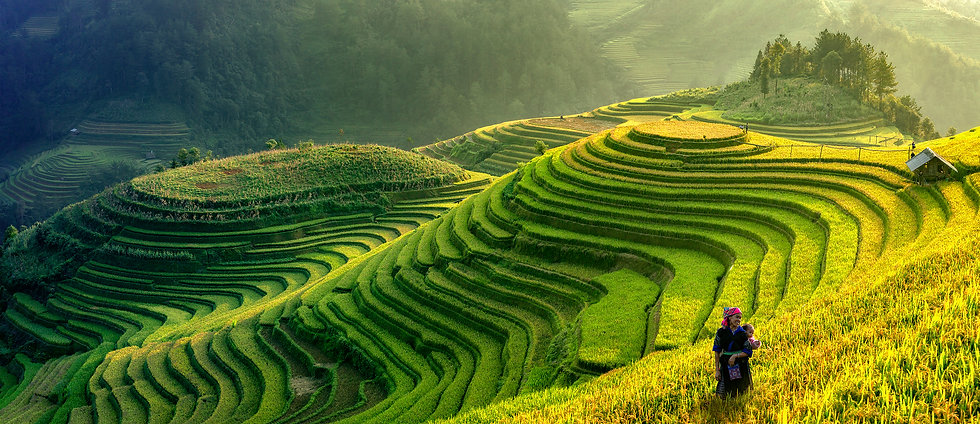 HLGK Rice Paddy Hill