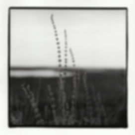 """Swan,"" Silver Gelatin Print, 2017"
