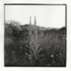 """Milkweed,"" Silver Gelatin Print, 2017"