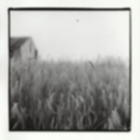 """Grass-Barn-Bird,"" Silver Gelatin Print, 2017"