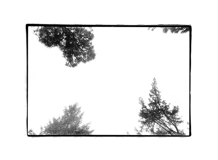 treehouse_72dpi.jpg