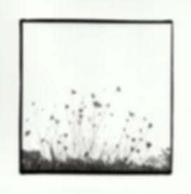 """""""Wind,"""" Silver Gelatin Print, 2017"""